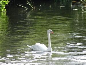 Stratford upon Avon and Warwick 043